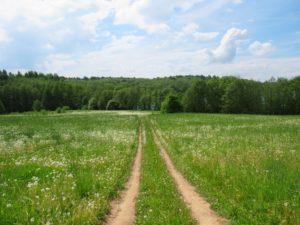 夏の草原にある一本道